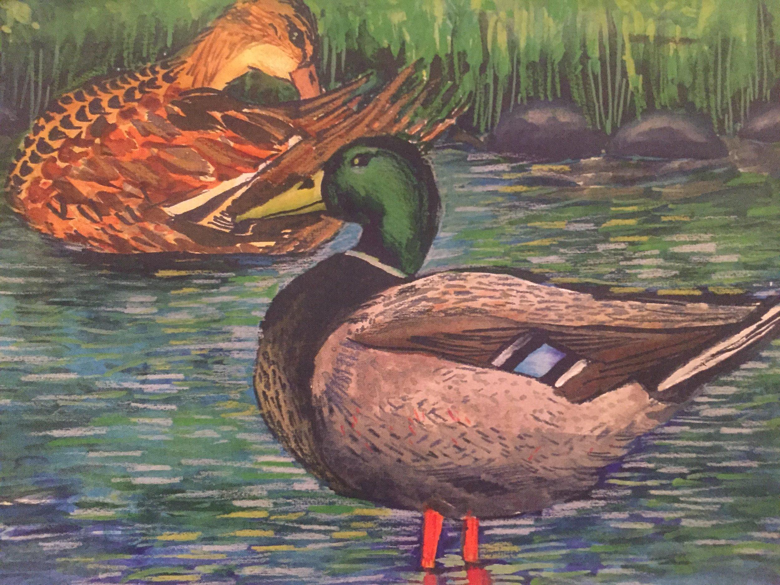 Mallard Ducks, Colored Pencils on Watercolor