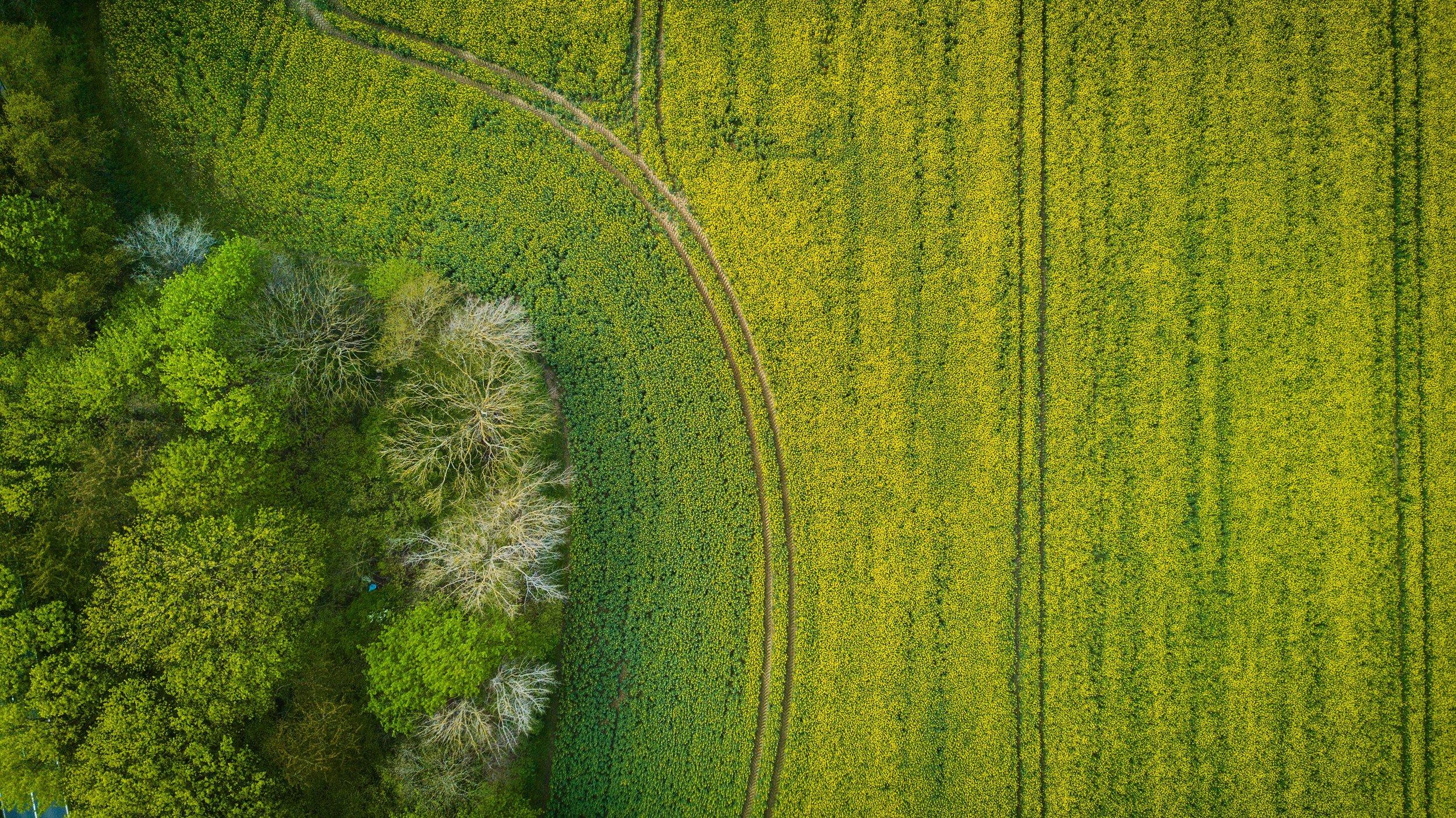 FARM TREE- WHY? abstract-aerial-aerial-shot-753871.jpg