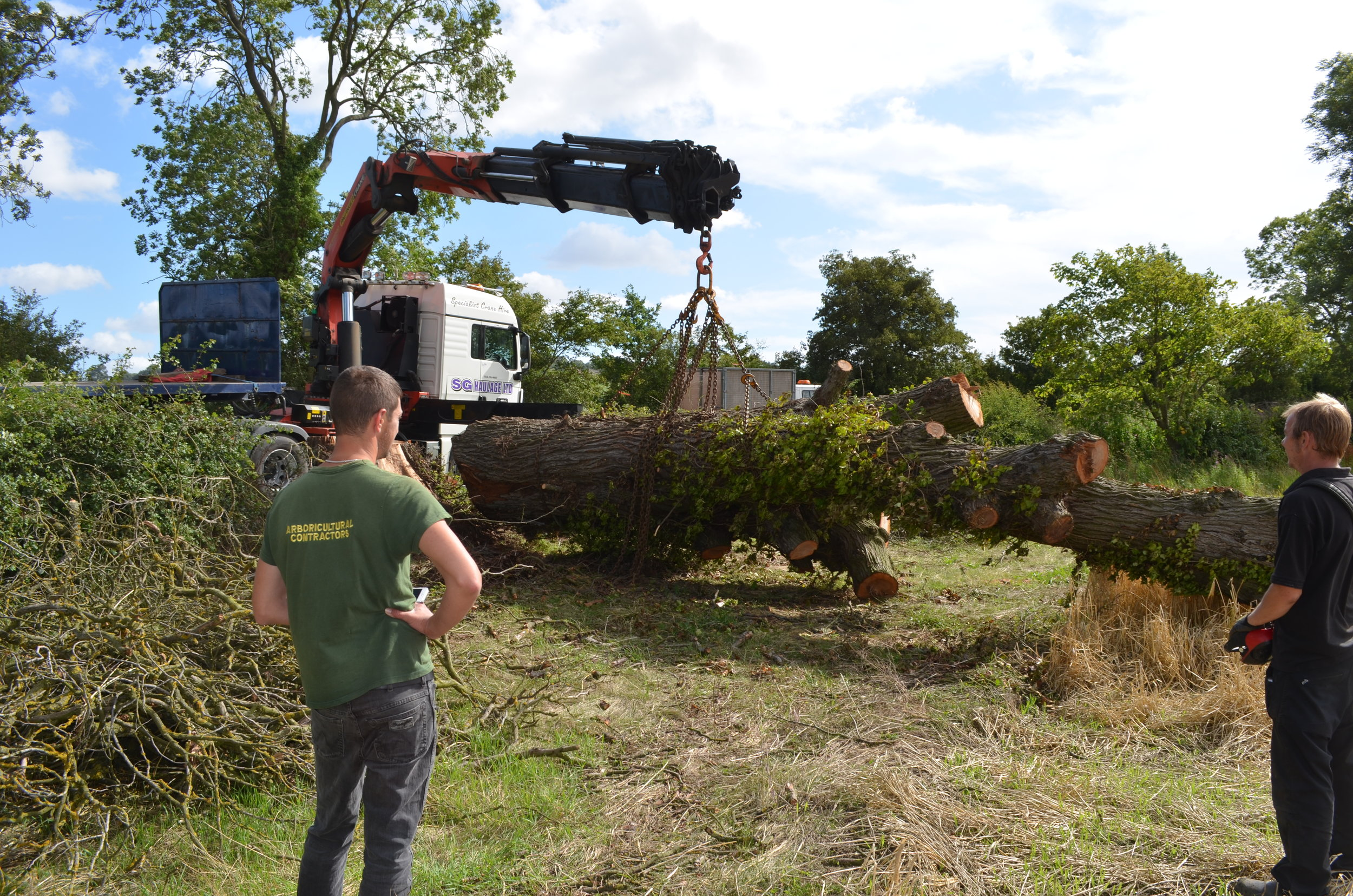 Lifting Elm with Hiab to go to sawmill