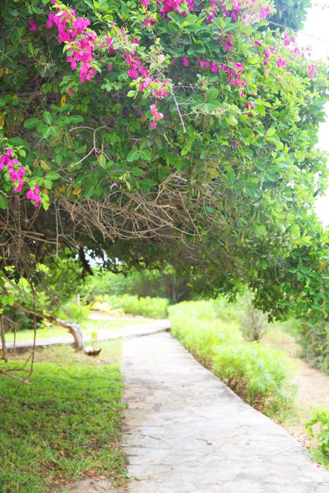 ARA-garden.jpg