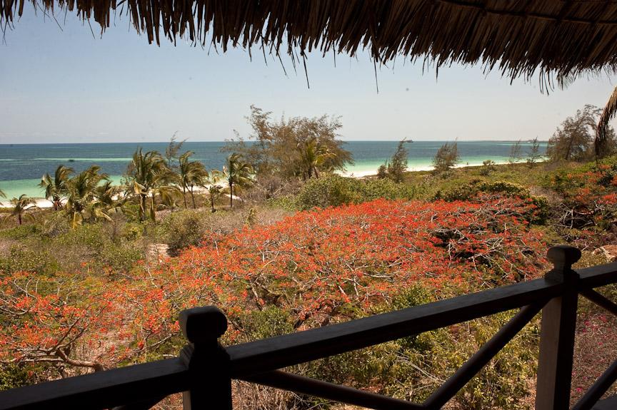 View of Watamu Beach.jpg