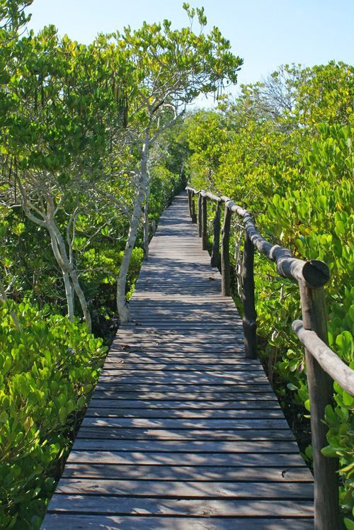 Boardwalk-wood.jpg