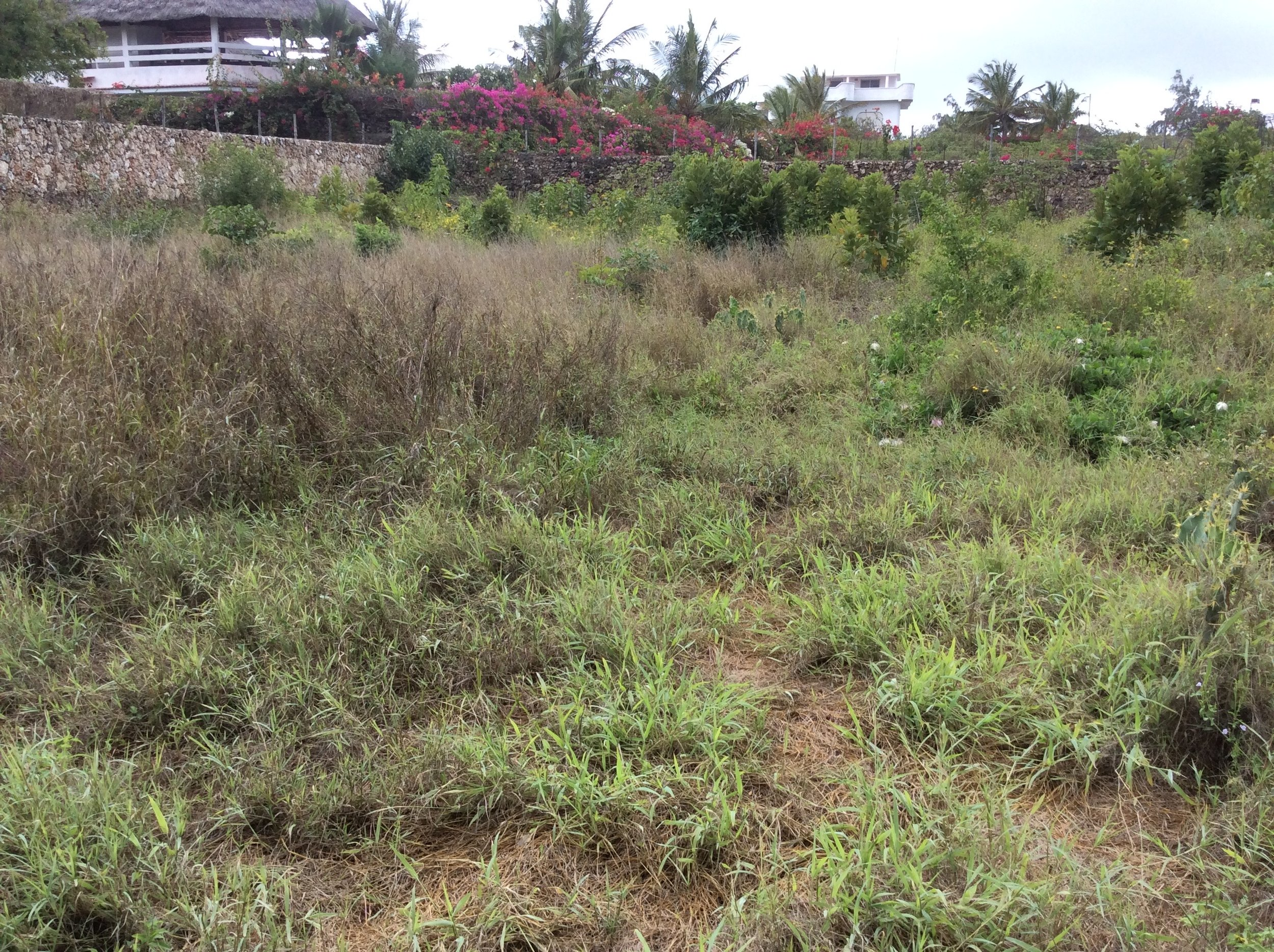 Empty plot 2.jpg