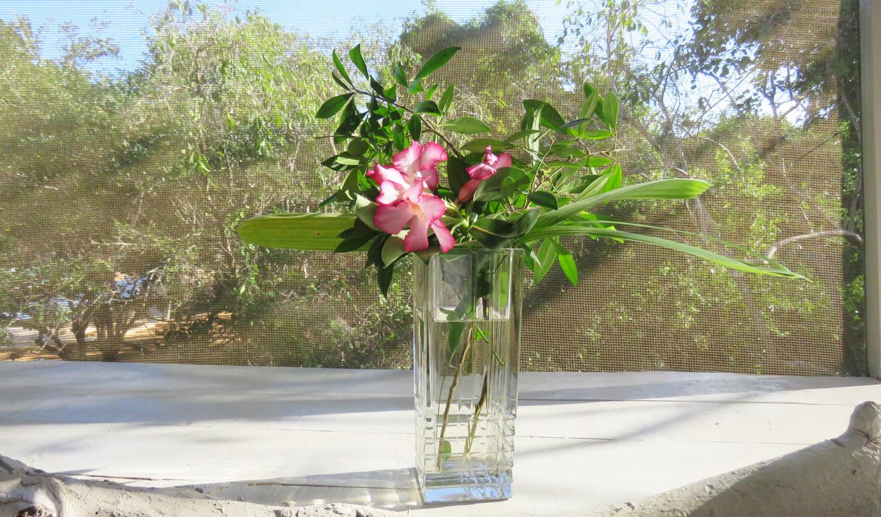 Shuma-flower.jpg