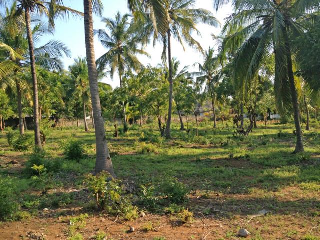3 Single Acre plots in Mida Forest for Sale. - Ksh 12 million (Kenyan Shillings) per plot.Ref: MSE01More Info