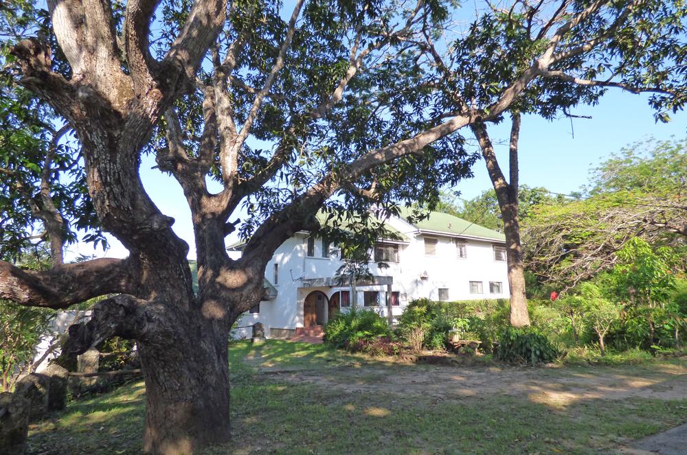 KA02-house-tree.jpg
