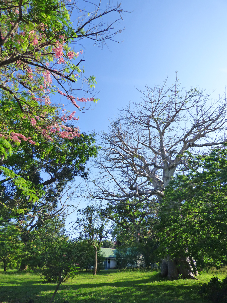 KA02-baobab-garden.jpg