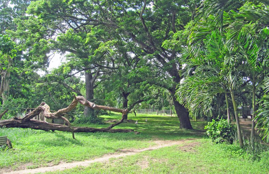 Mtwapa-gardens.jpg