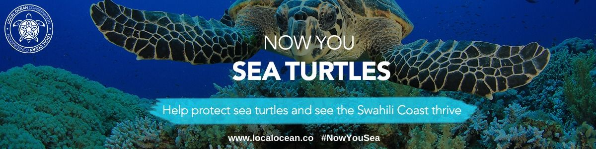 Website-Banner-Now-You-Sea-Turtles-JPG.jpg