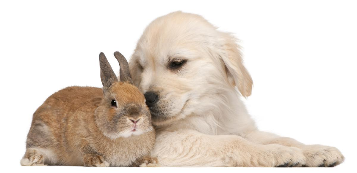 dog-and-rabbit-hd-free-wallappers-for-desktop-free.jpg