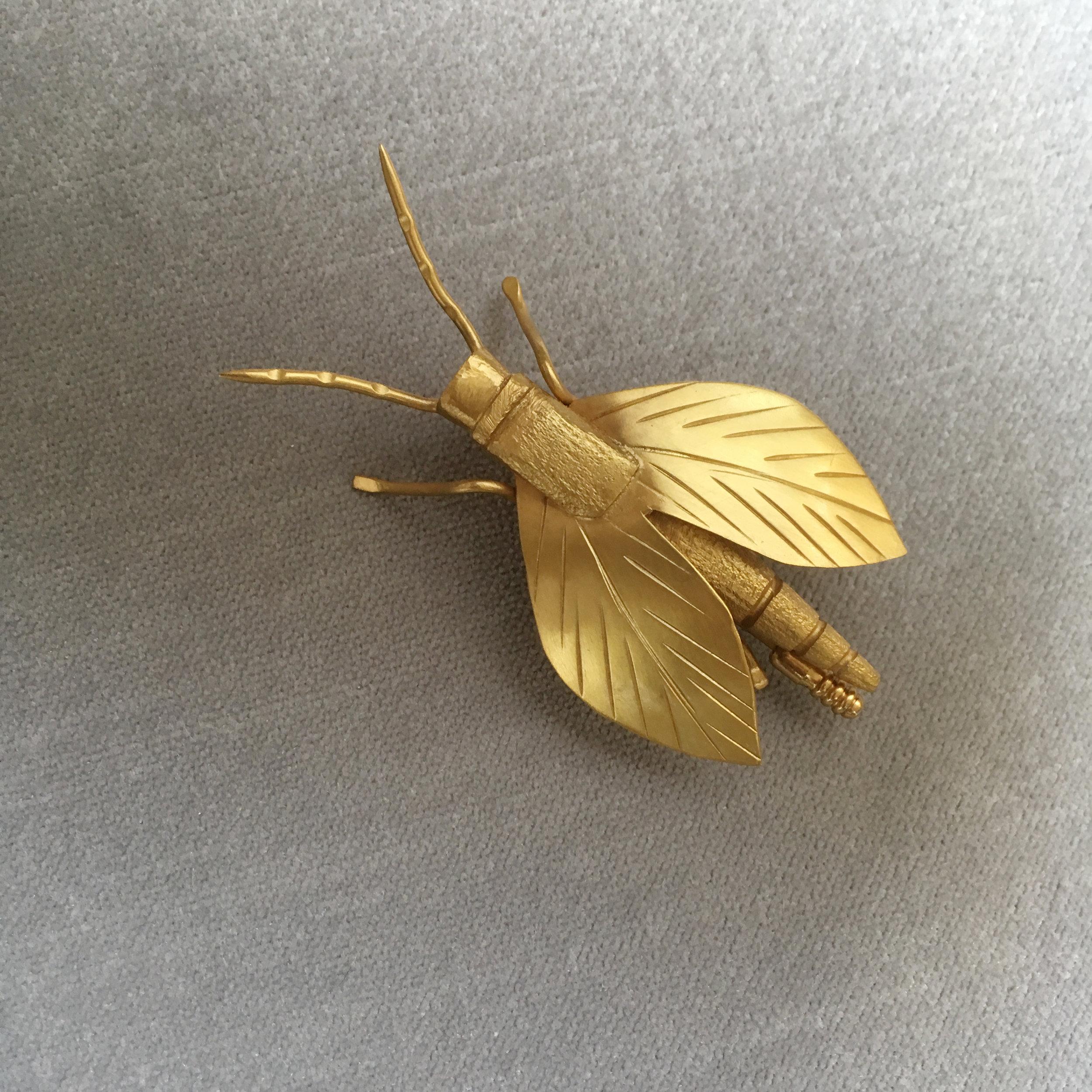 eusocial hornet -