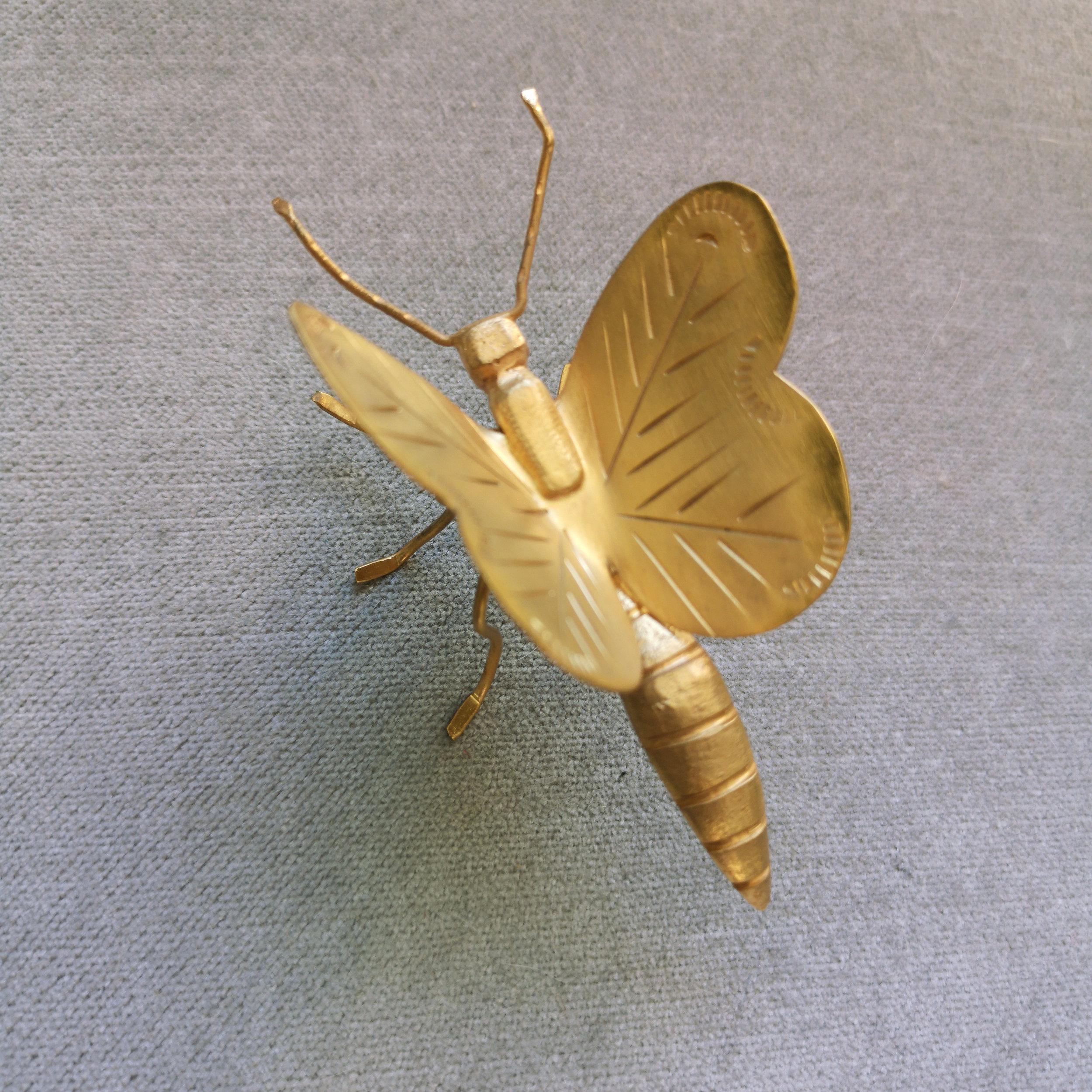 social butterfly -