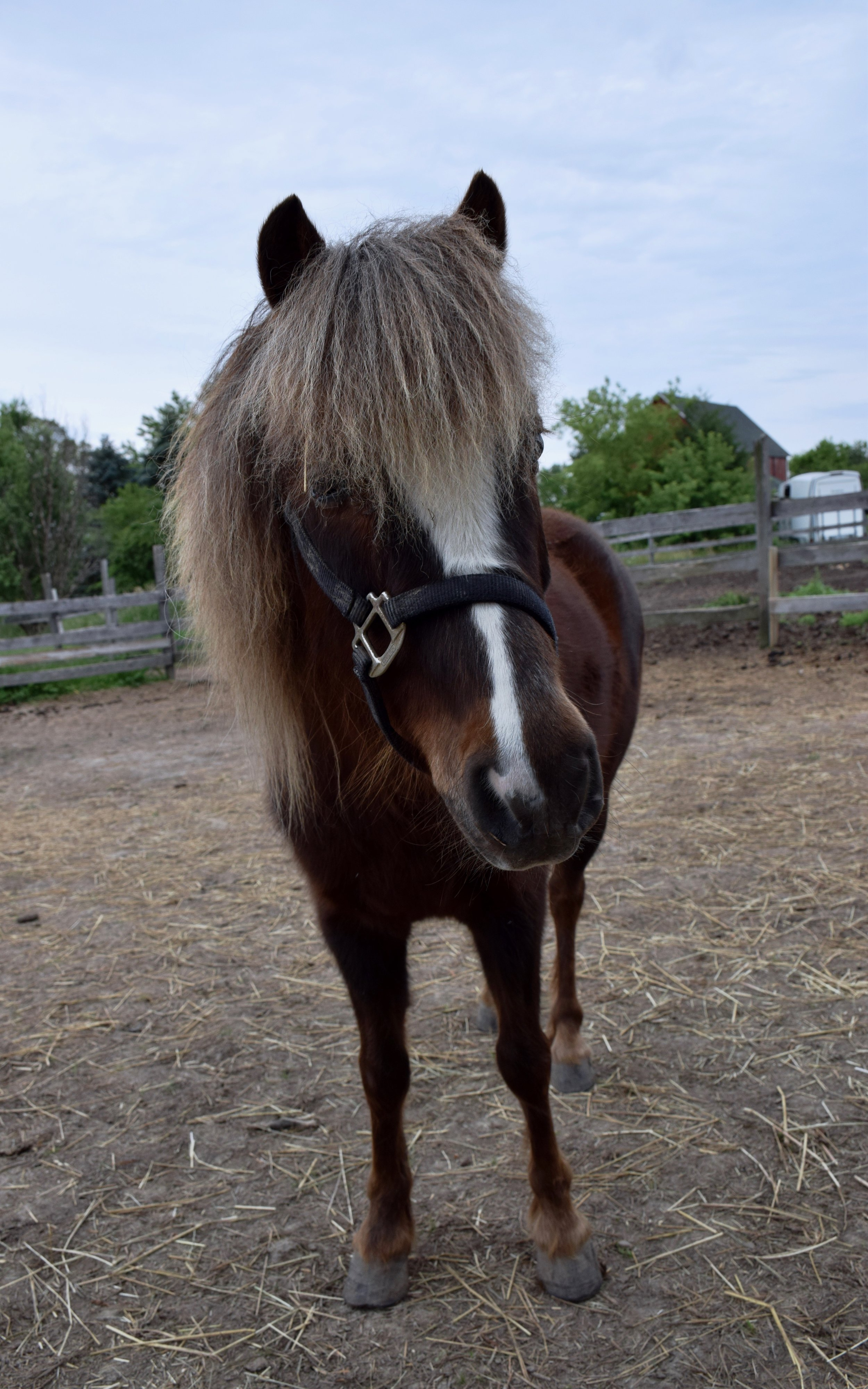 Killian - Full Sponsor: Lynn MeehanBreed: Welsh ponyKillian has quickly become the farm favorite. He came to us because his owner was moving. He is visually impaired and likes hanging out with his friend Whistler.