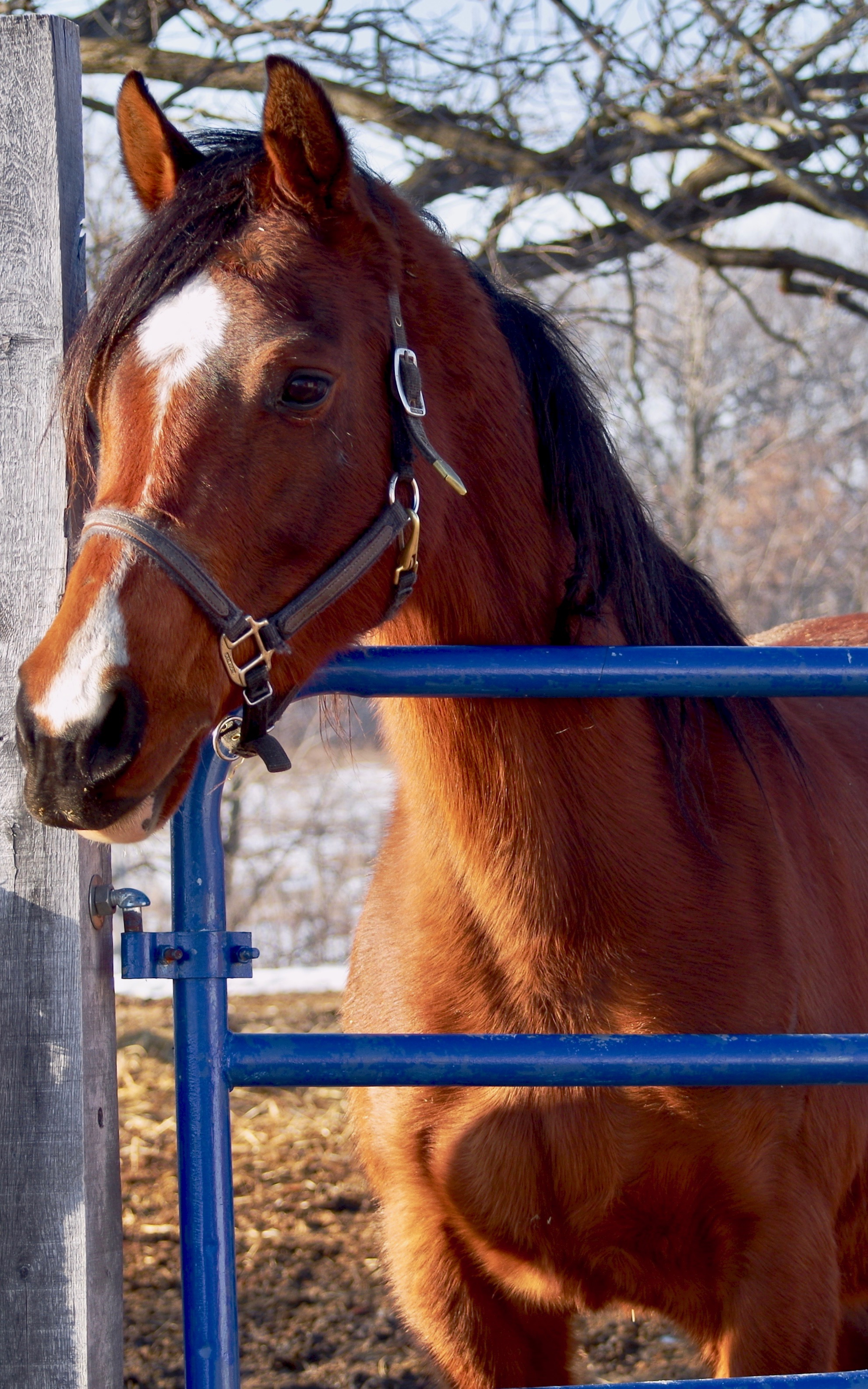 Truffle - Seeking a sponsor!Breed: Egyptian ArabianWith her refined head and friendly demeanor, she quickly fit in with the rest of the Arabians. Donated by Karen & Lyle Stoner.