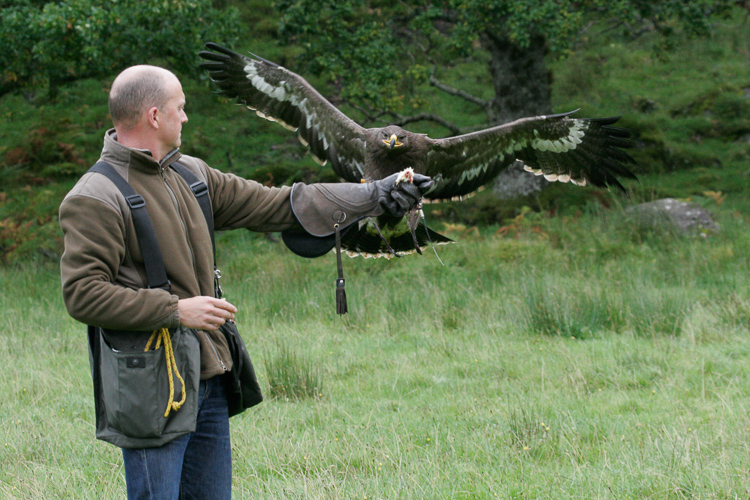 steve and ivan, the steppes eagle.jpg