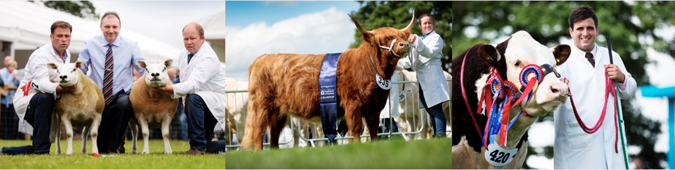 livestock.jpg
