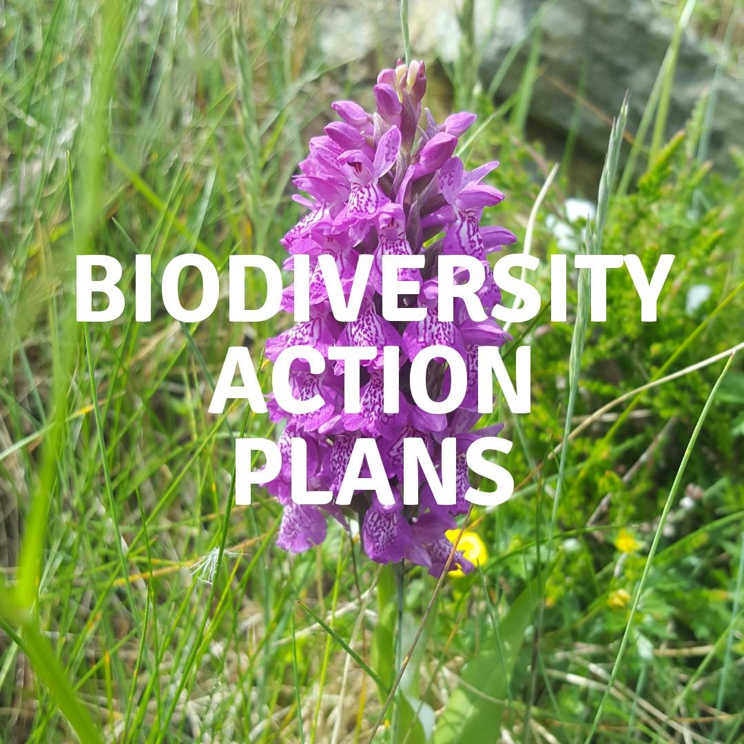 Bio_Action+Holder.jpg