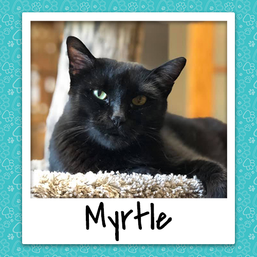 myrtle_bio_500x500.jpg