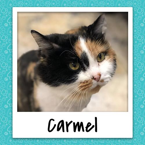 carmel_bio_500x500.jpg