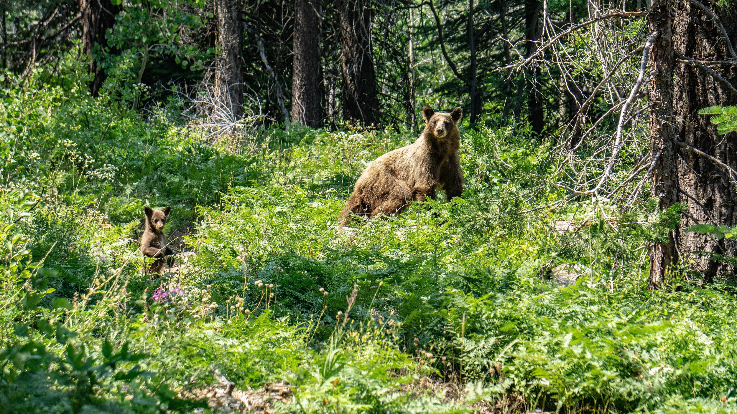 July 23-30 -- Backpacking Yosemite and Tyndall Peak (62 of 113).jpg