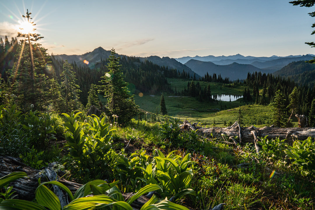 A clear morning in Mount Rainer National Park by Dalton Johnson Media