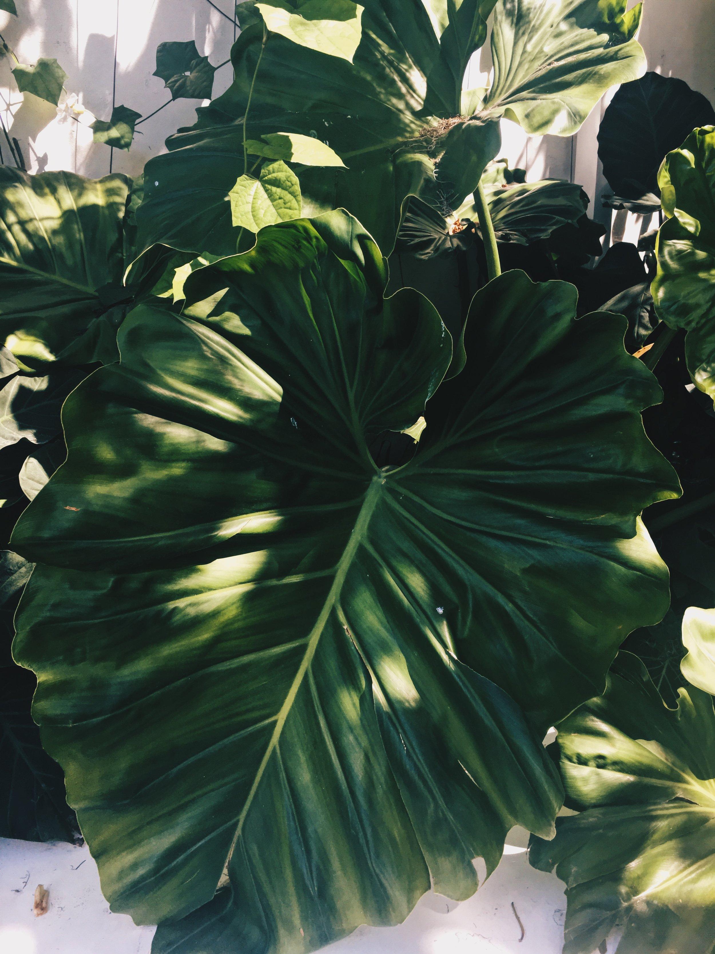 Plant The Future  x  Miami Mojito Company