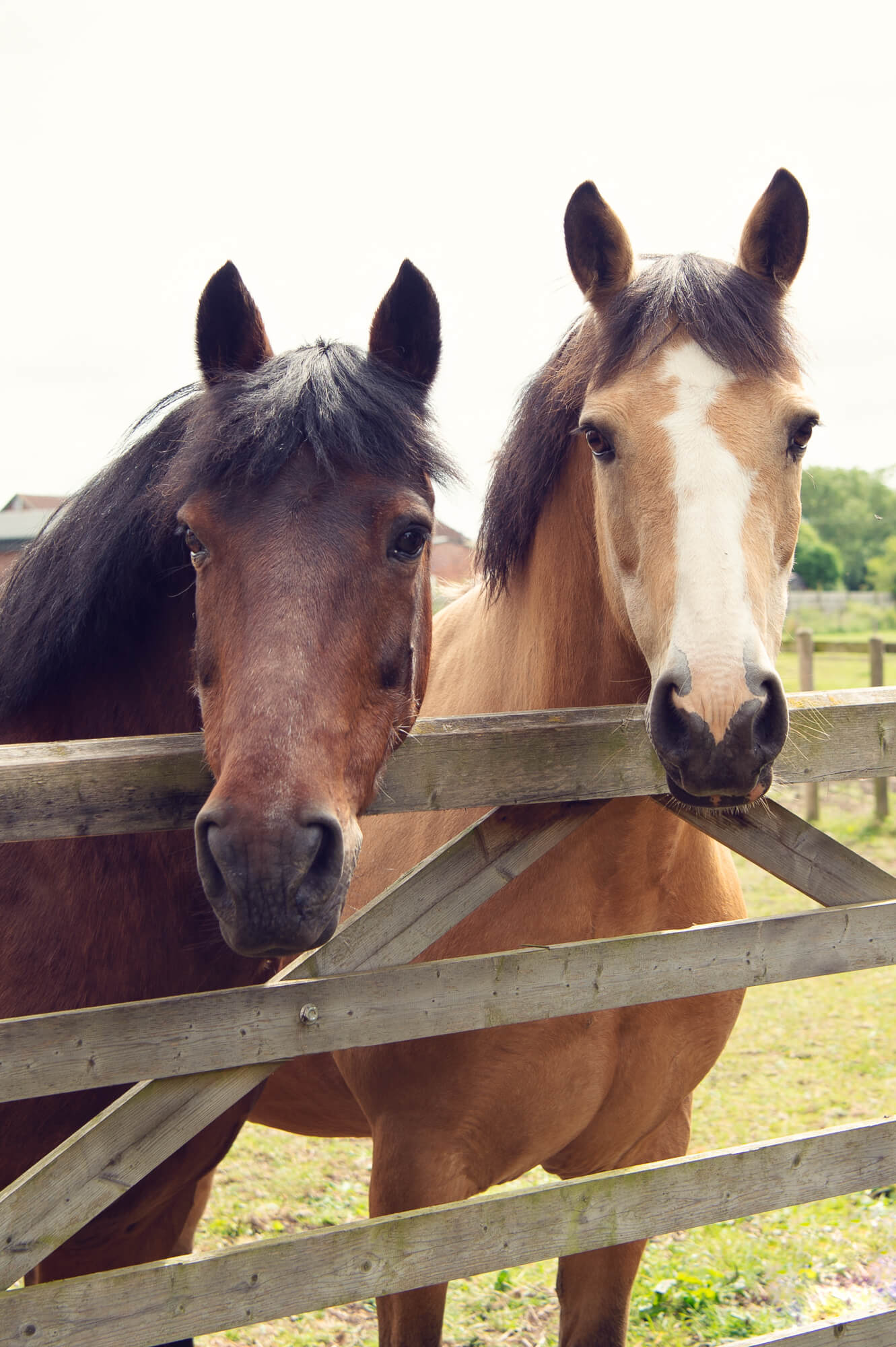 The Horses - Active Participants: Our horses are experienced and have a proven record in creating safe, effective, profound, delightful Equine Guided Learning events. We take pride in the fact that they are relaxed and happy and willing to show up for the work.