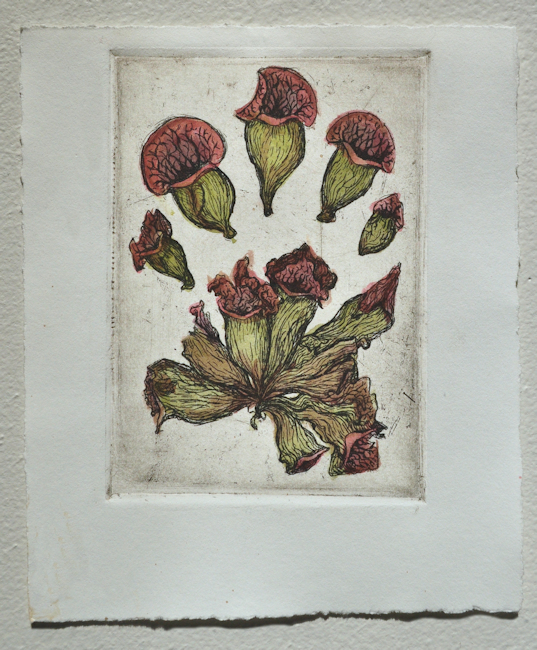 Botanical Explorations, ongoing series of printmaking experiments.