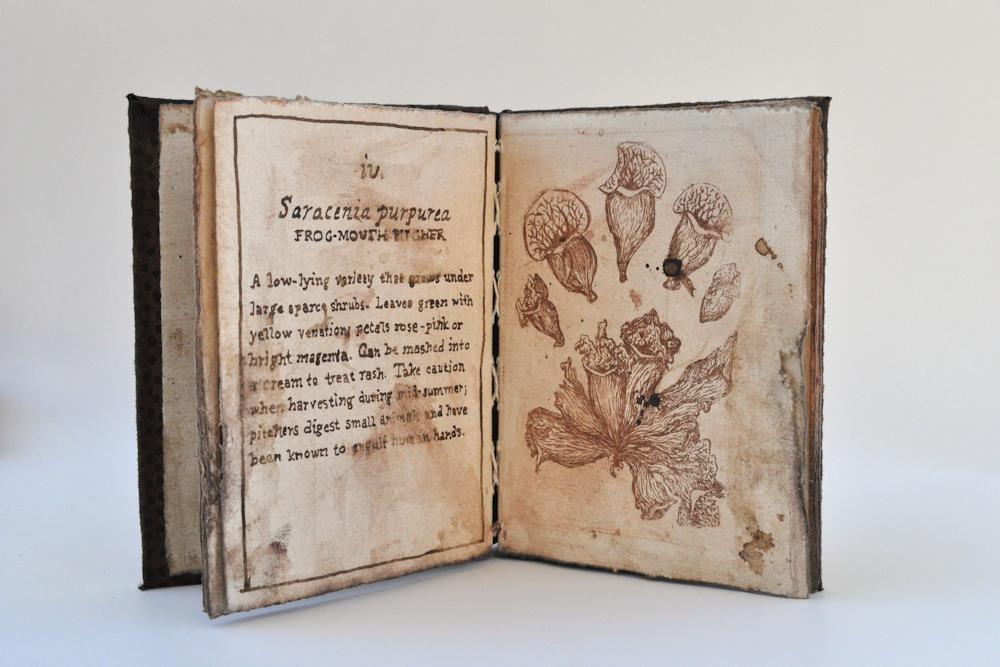 V. Antipothe's Medica Botanicum