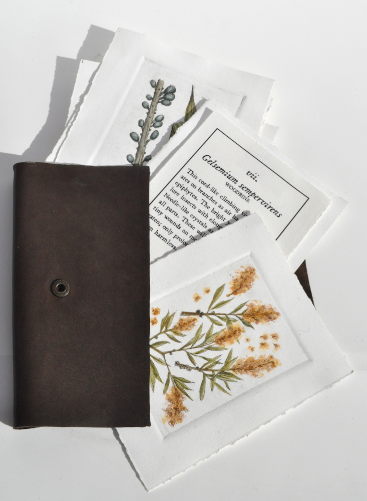 V. Antipothe's Medica Botanicum Folio