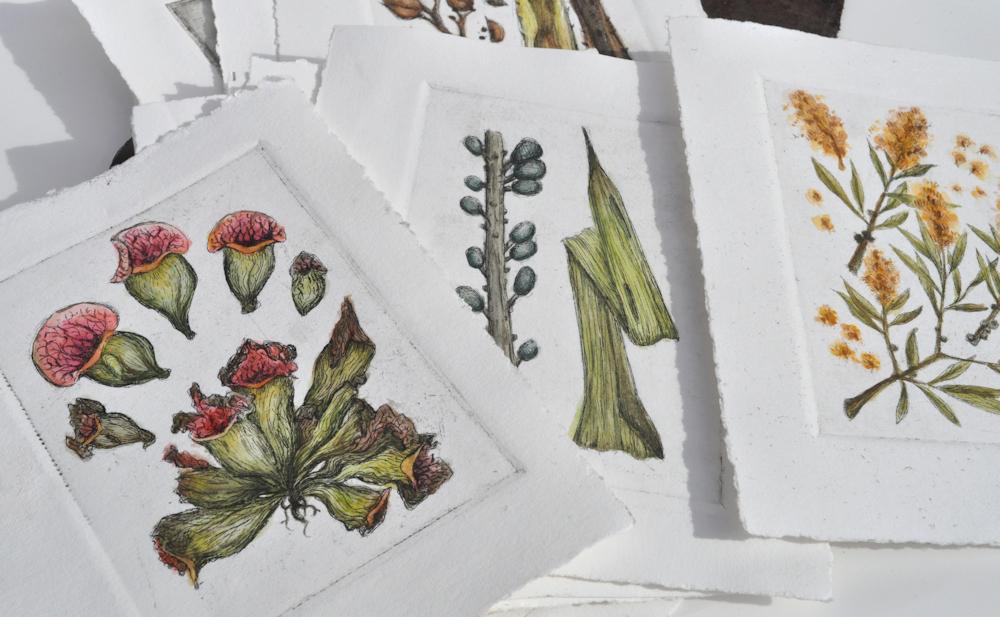 botanicum4-5a.jpg