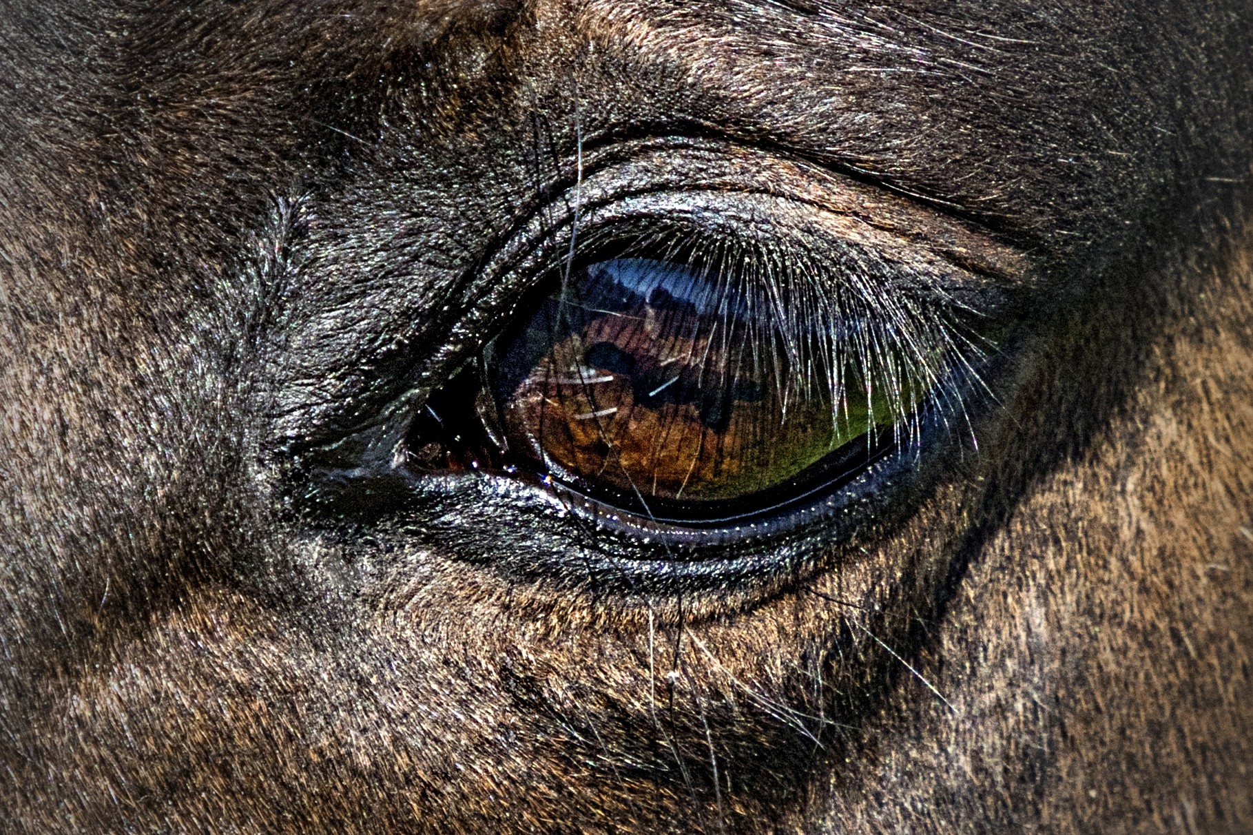 "Why Horses? - ""The horse has the stunning capacity to mirror human emotions and facilitate human healing. That is why the horse can be our most gifted teacher."""