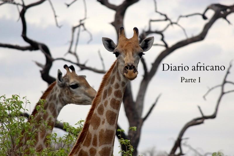 giraffs.JPG