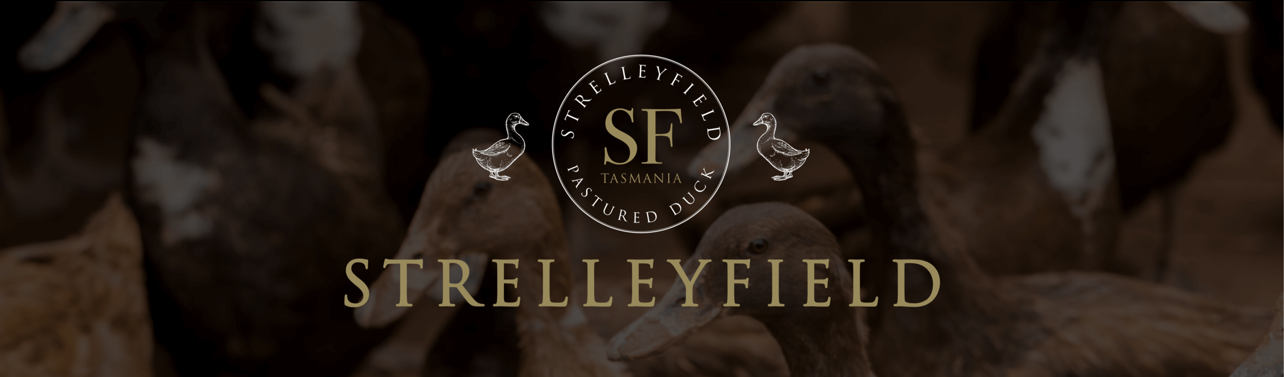 strelleyfield-banner.png