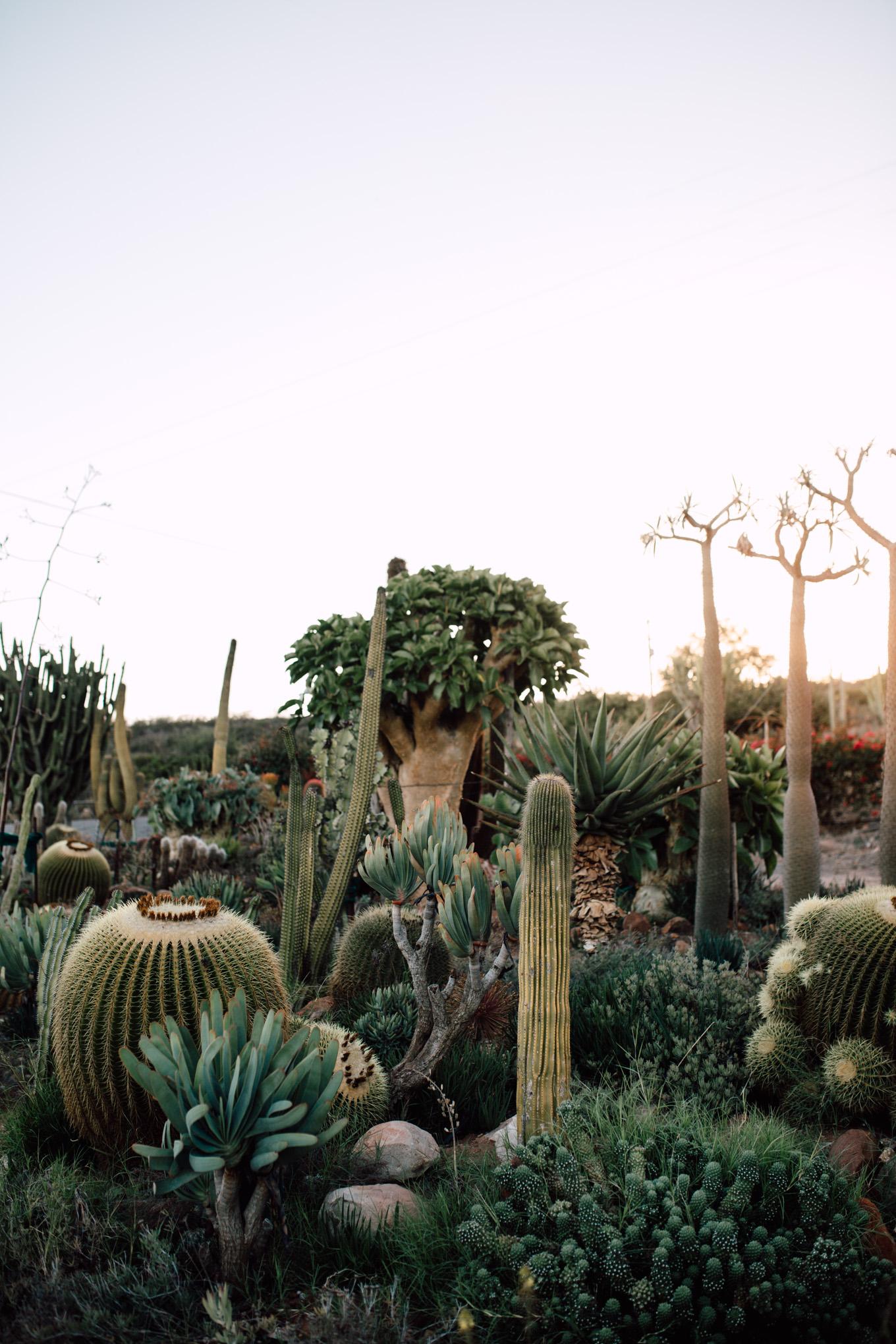 Cape-Town-Pia-Anna-Christian-Wedding-Photography-South-Africa-Bride-Cactus-1.jpg