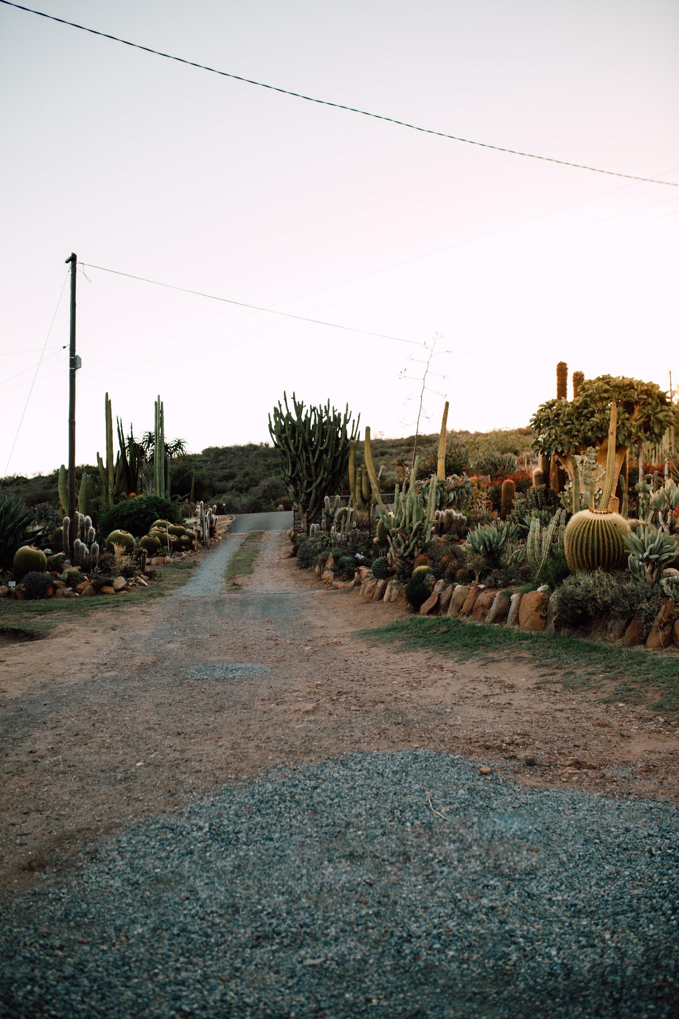 Cape-Town-Pia-Anna-Christian-Wedding-Photography-South-Africa-Bride-Cactus-3.jpg