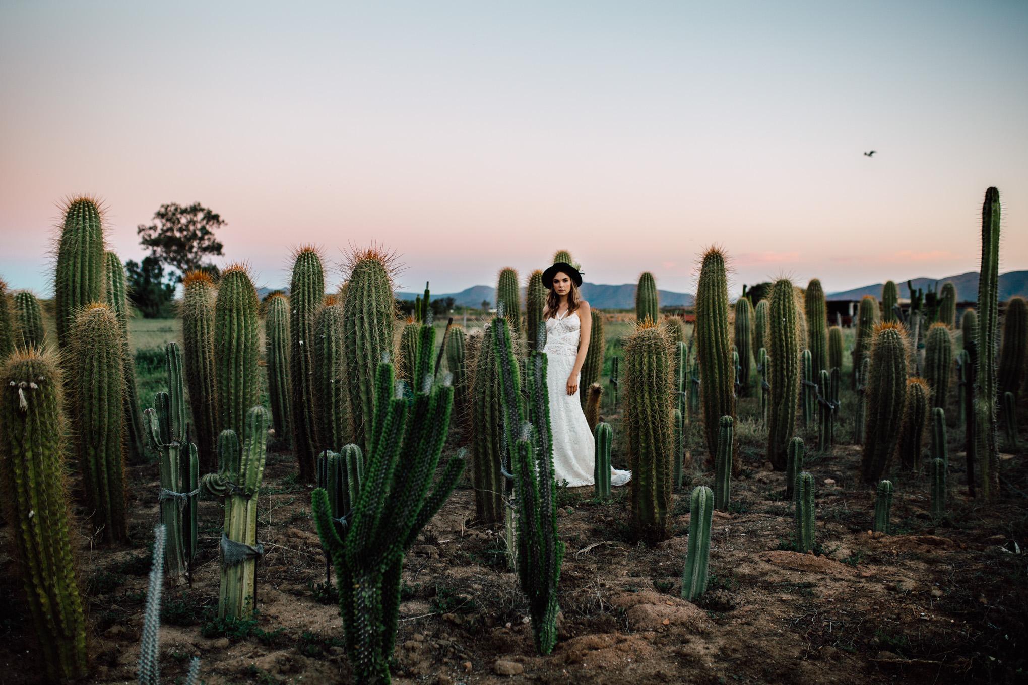 Cape-Town-Pia-Anna-Christian-Wedding-Photography-South-Africa-Bride-Cactus-35.jpg