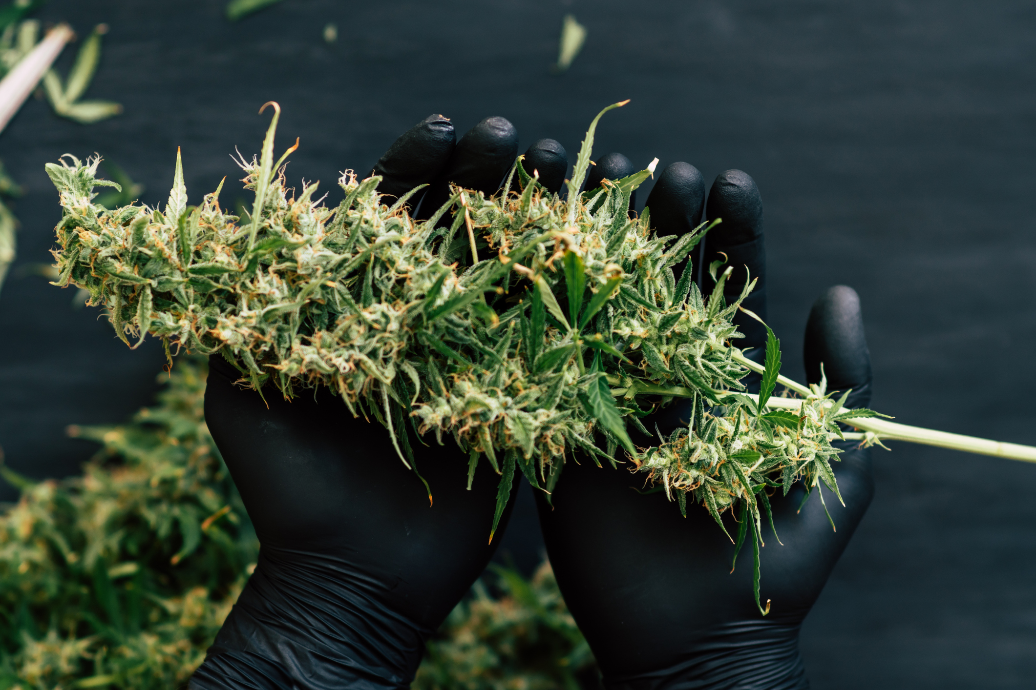 PR in the cannabis industry is simply a must.     -