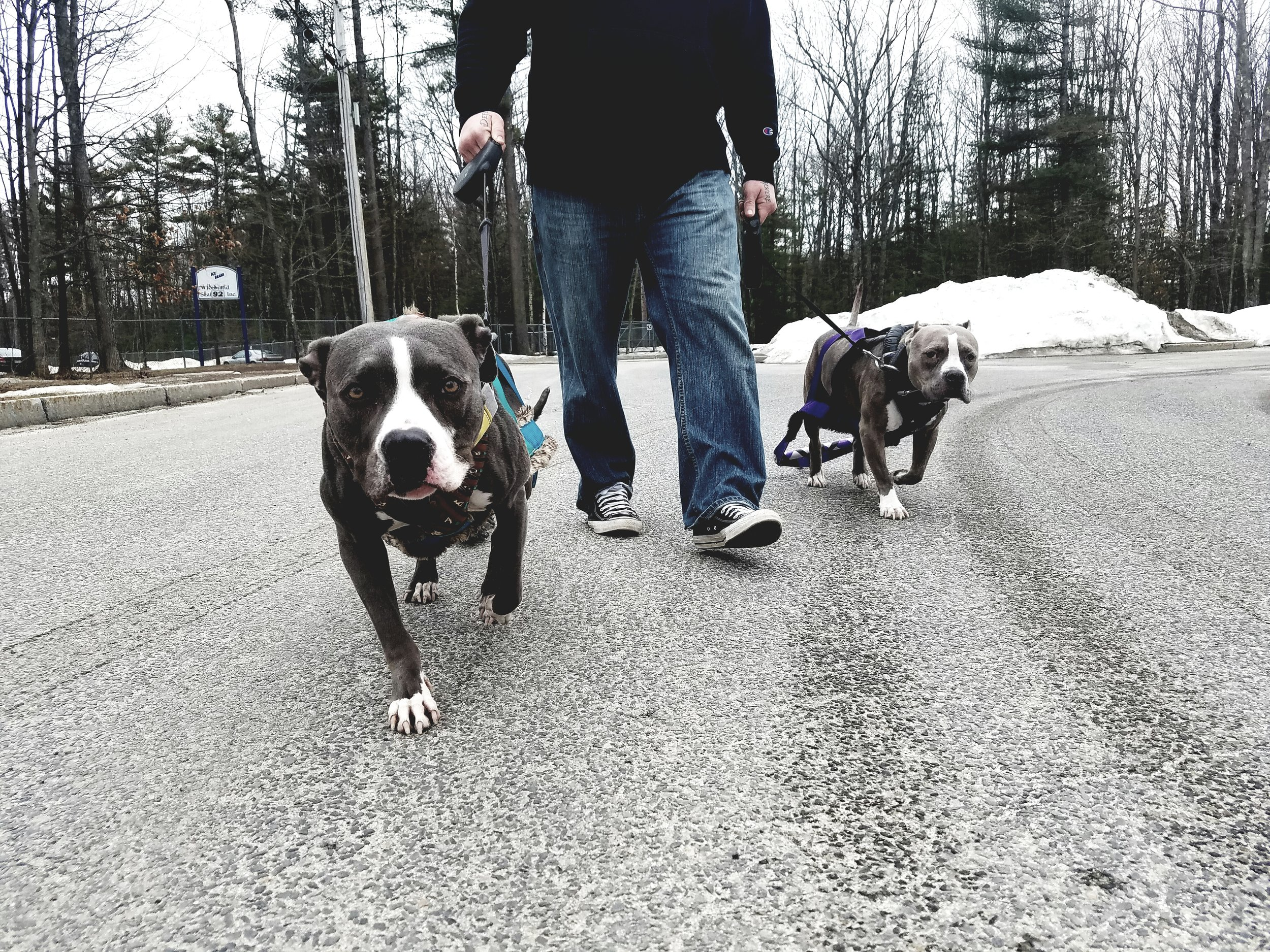 Mya and Jax on a CRT session with Jay Jack of Next Level Dogs