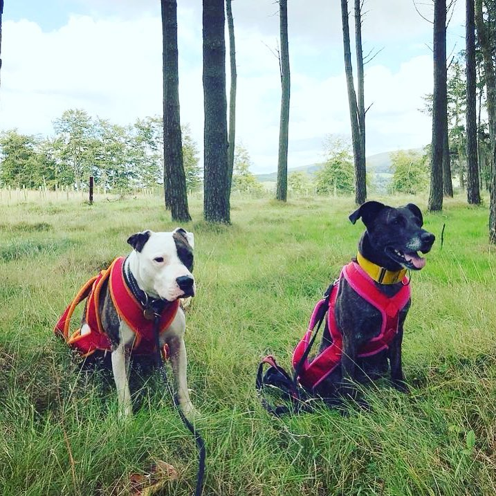 """""""The online program and support received from Ashley is fantastic! It is now one of our favorite activities, it is so much fun! We started the program as my dog was getting stiffer with age, and it has made a significant difference in improving his range of movement, improve muscle tone, and reduce stiffness in his hips. It is also helping him cope better with his anxiety and making him overall a happier dog! Can highly recommend!"""" - Linnea Lyckberg"""