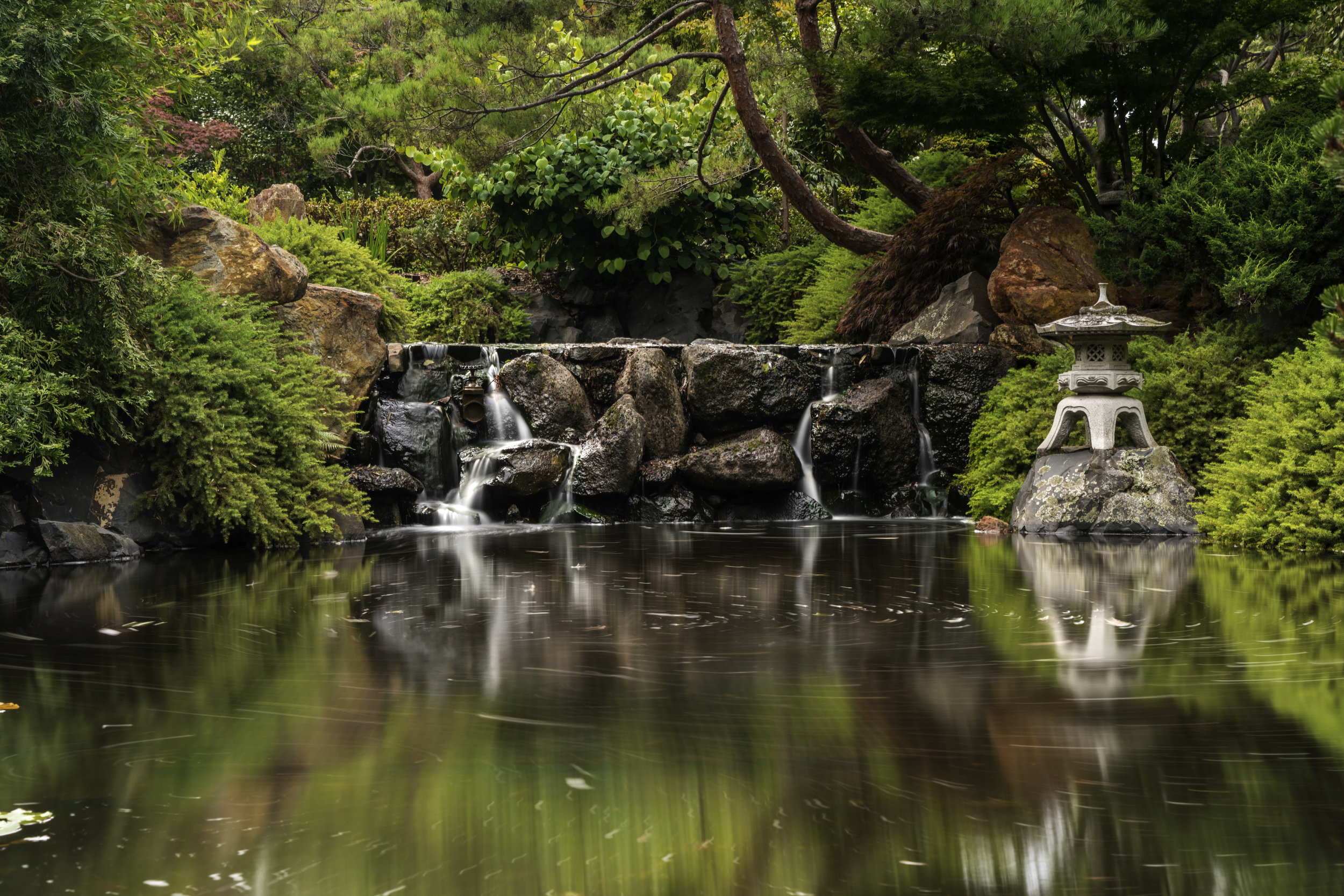 I left the Royal Botanical Gardens in Hobart with a bunch of 'okay' photos – good enough for a desktop background, but doesn't make the cut for my portfolios.