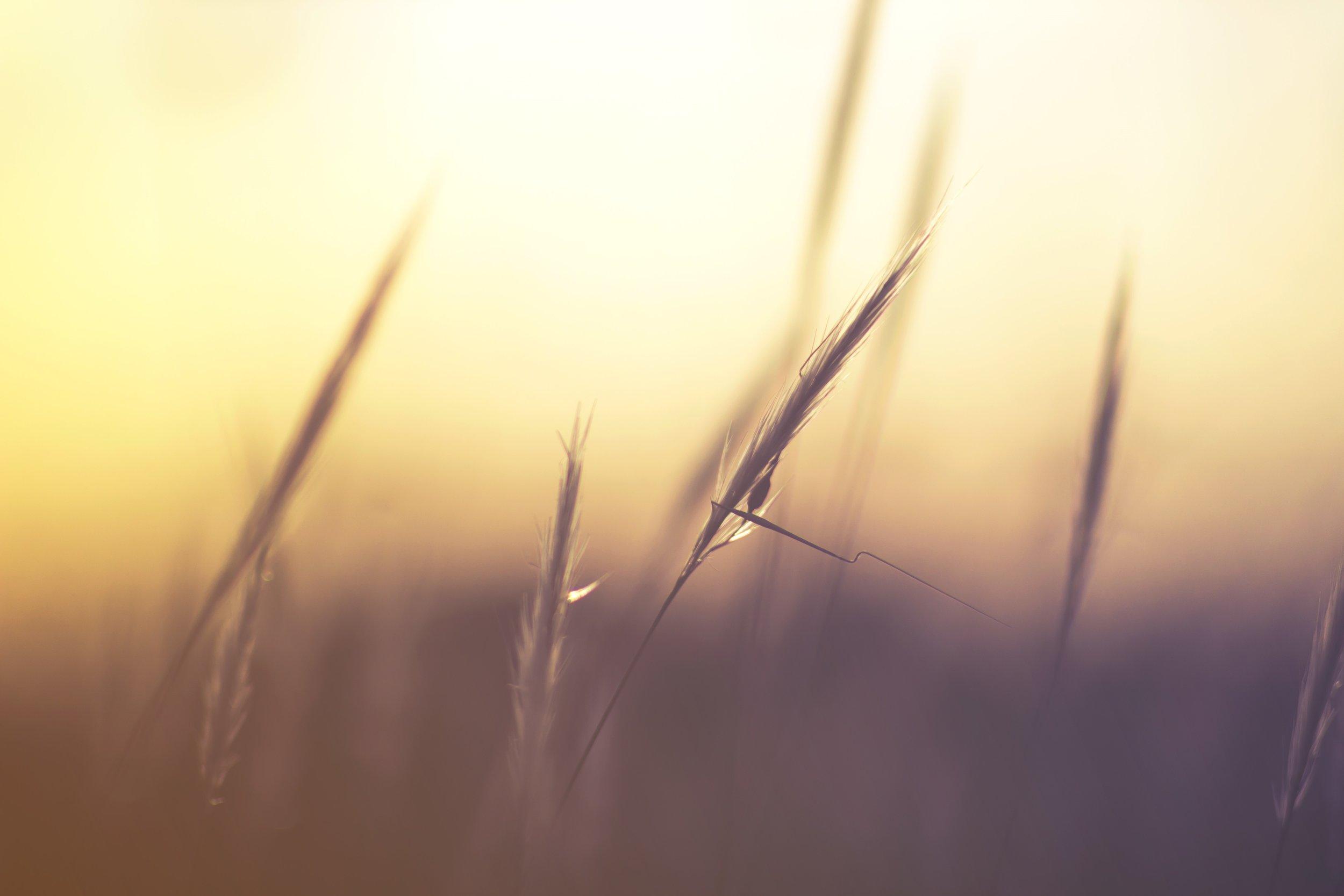 port grass.jpg