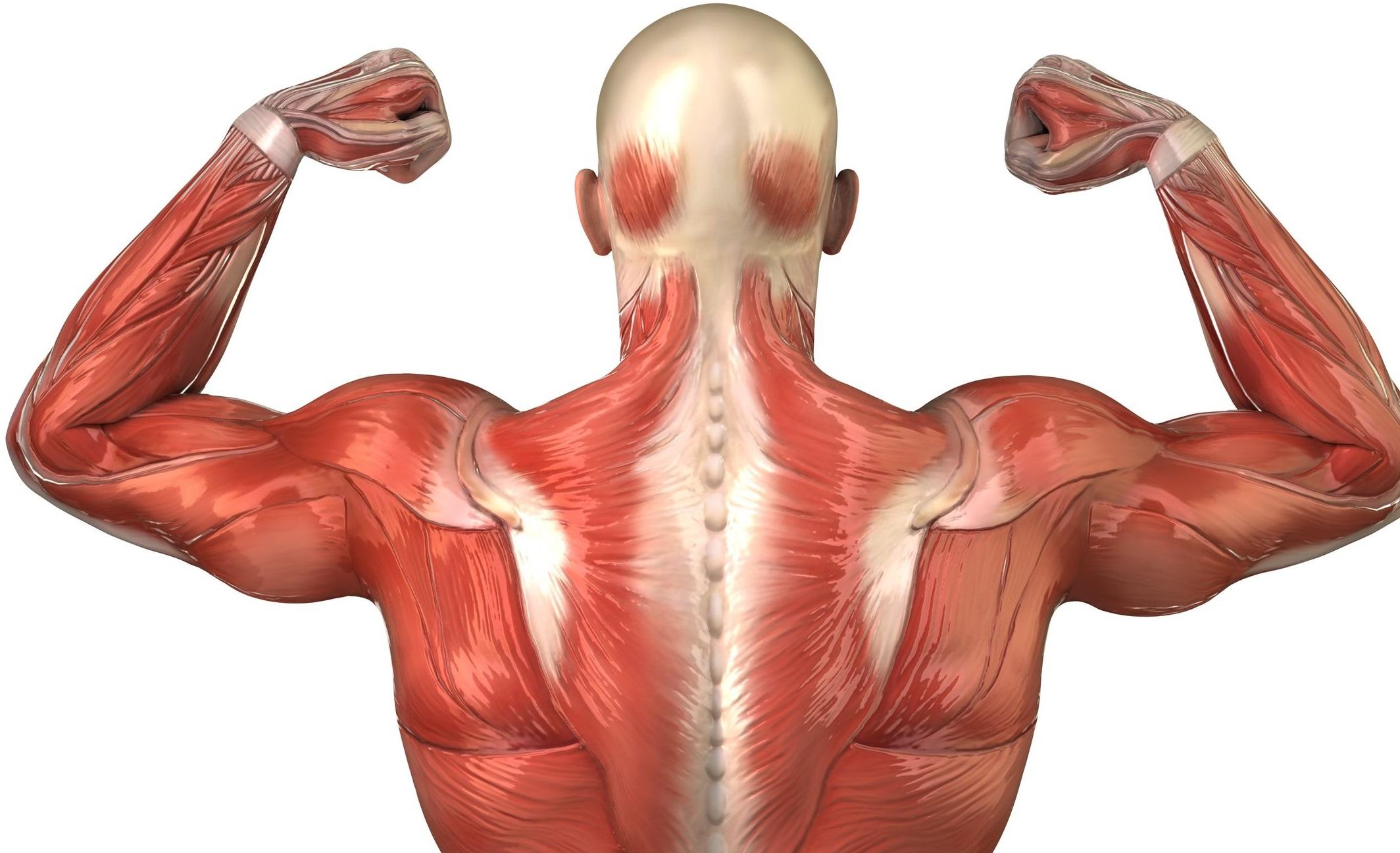 ems bionic fitness