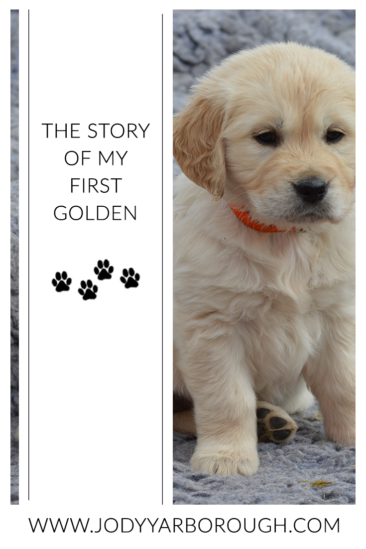 the story of my first golden.jpg