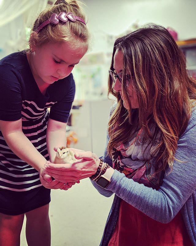 Baby chicks + Mindfulness make my Memorial Day weekend oh so sweet. 🐣 • #mindfulnessinschoolsproject #mindfulness #mindful  #mentalhealthawareness #meditation #education @emilytullyyoga
