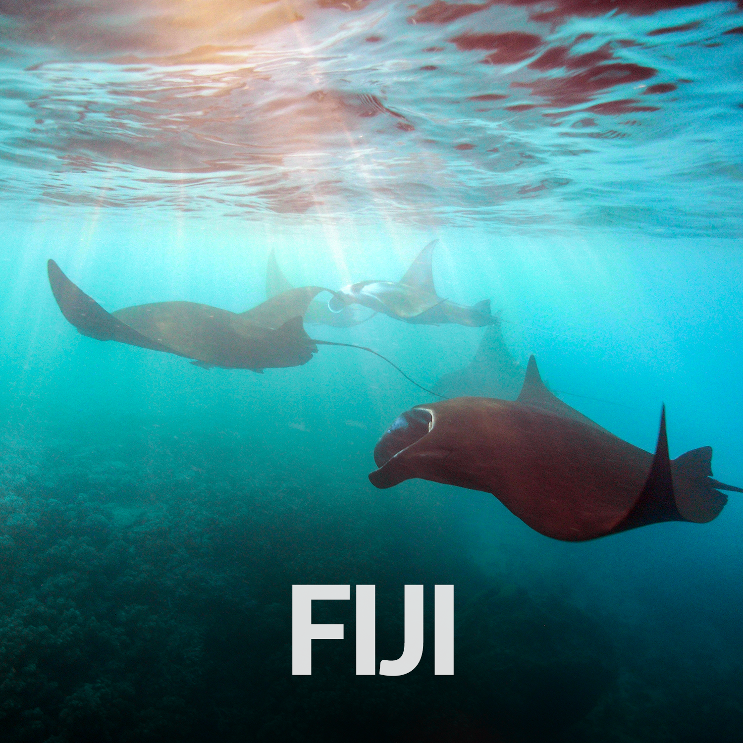 Our Affiliate Projects_Gallery_Fiji.png