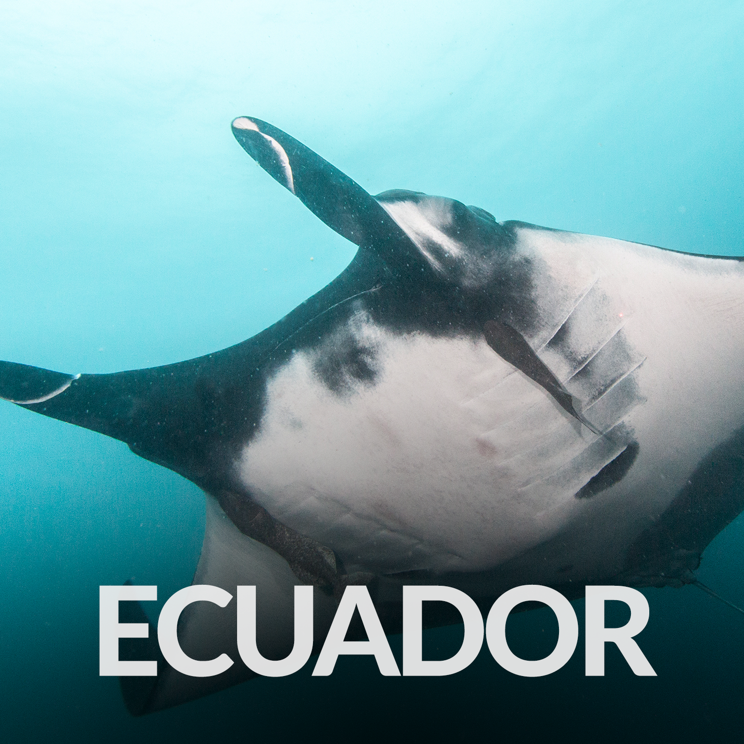 Our Affiliate Projects_Gallery_Ecuador.png