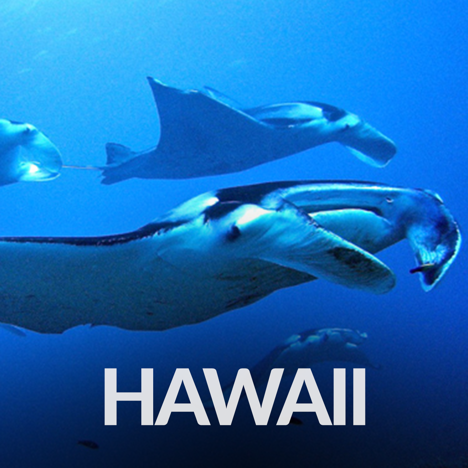 Our Affiliate Projects_Gallery_Hawaii.png