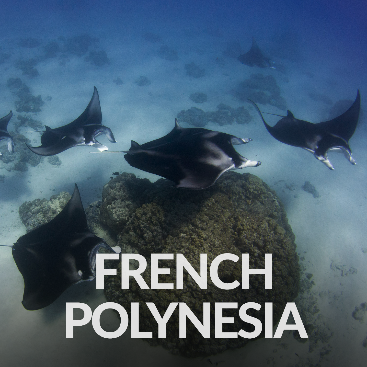 Our Affiliate Projects_Gallery_French Polynesia.png