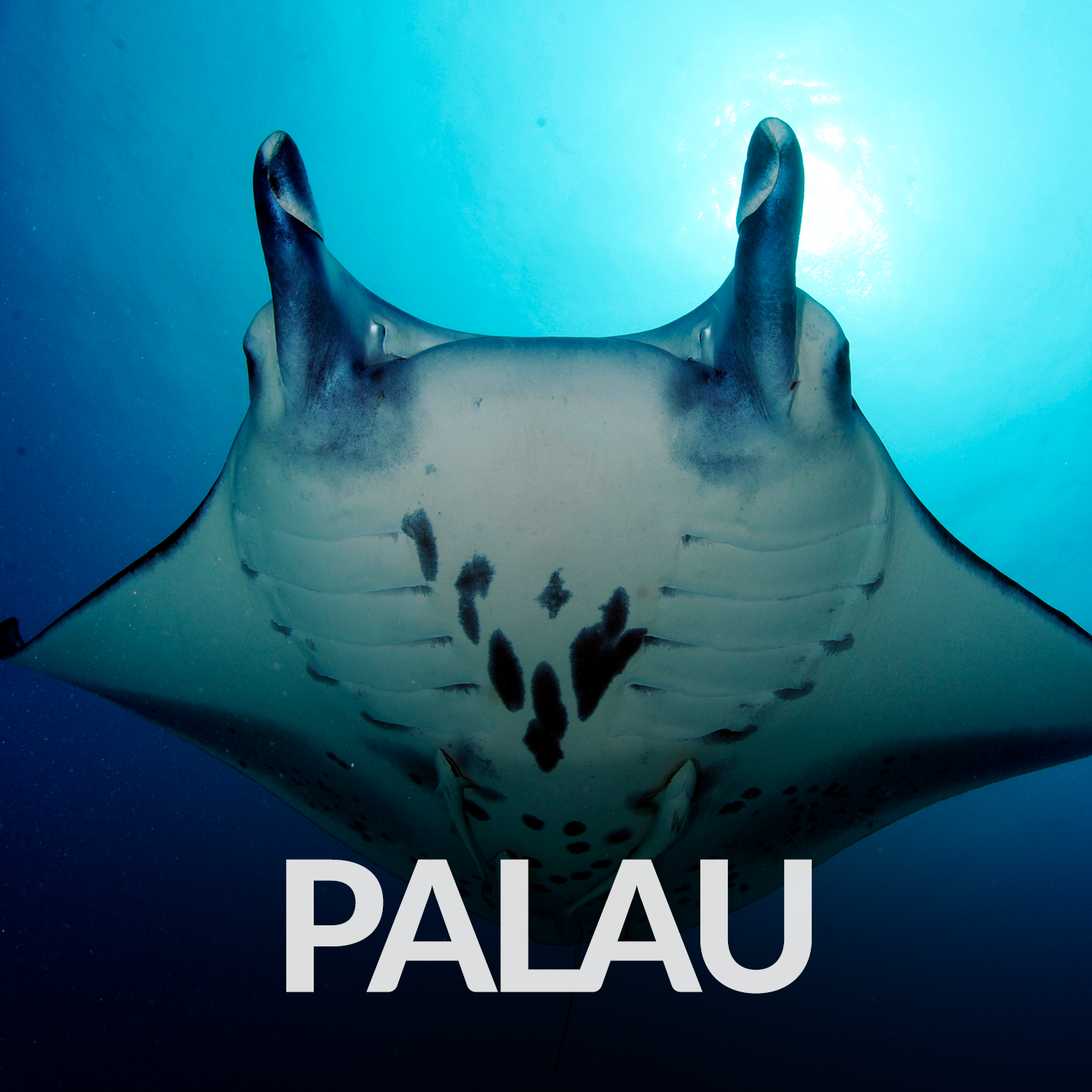 Our Affiliate Projects_Gallery_Palau.png